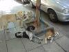 dog-walker charges